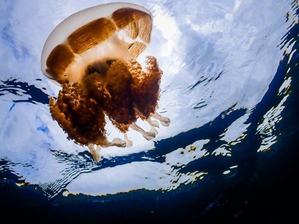 Jellyfish Lake3.jpg