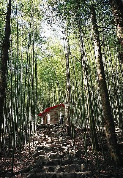 八仙山竹林步道.jpg