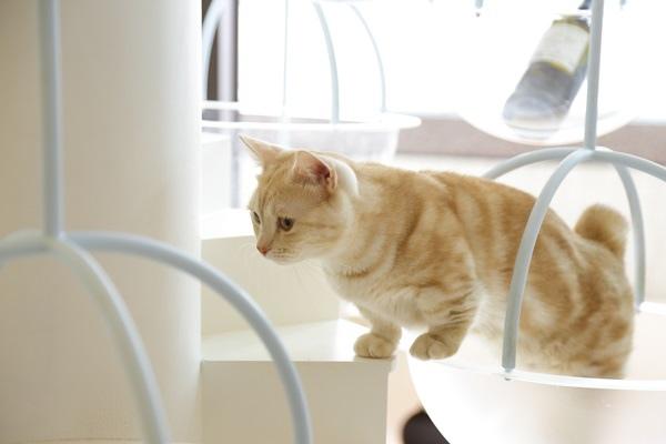 _MG_6463貓的生活提案.JPG