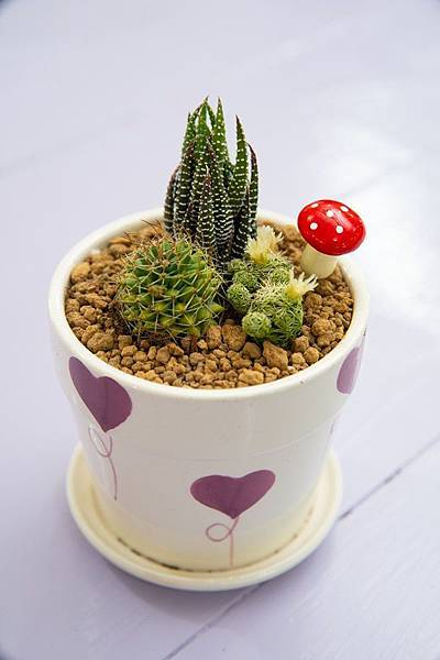 多肉植物DIY 1.JPG