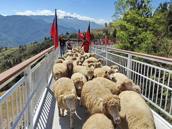 步道上的綿羊.jpg