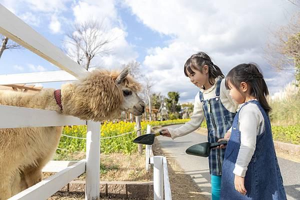 alpaca羊駝.jpg