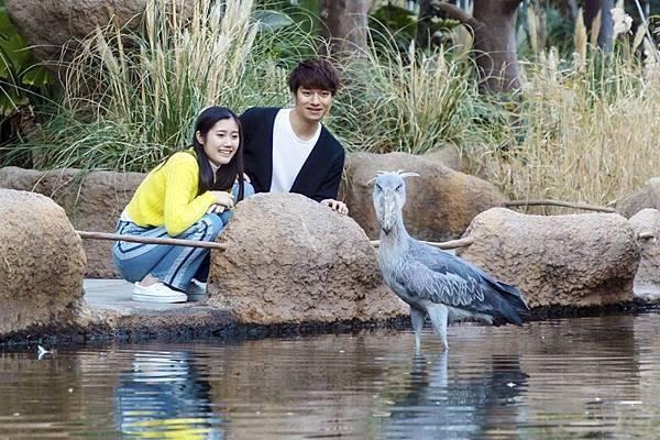 shoebill1鯨頭鸛.jpg