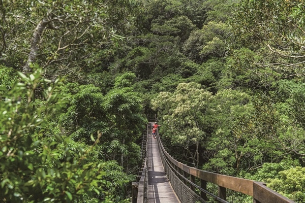 CCC_1905-CMYK沿山步道吊橋.jpg