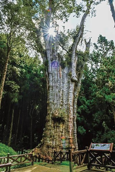 CCC_6092-CMYK水山巨木.jpg