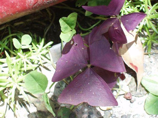 不知名的花 很特別.JPG