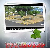 r_place02_01.jpg