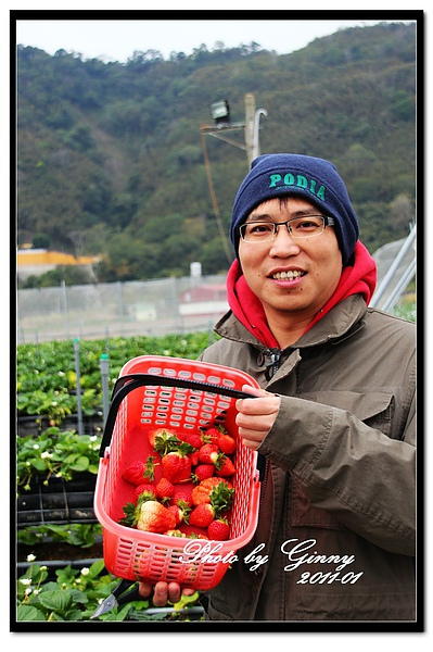 採草莓4-2.jpg