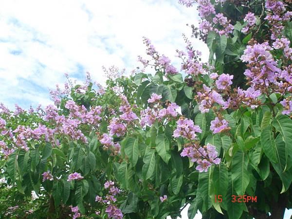 紫色花開1 (1).JPG