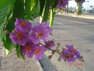 990515又見紫色花^_^_12.JPG