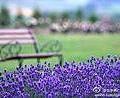 紫色花.jpg