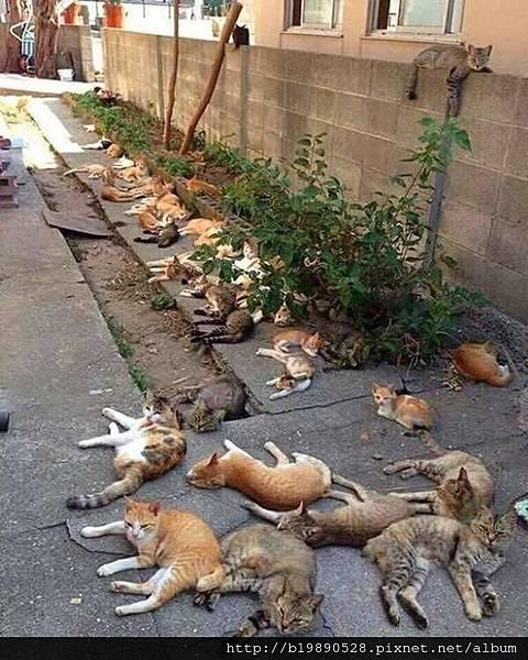 cat01.jpeg