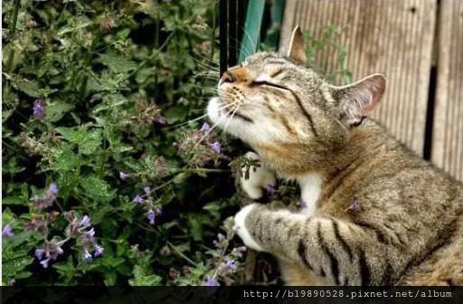 cat04.jpeg