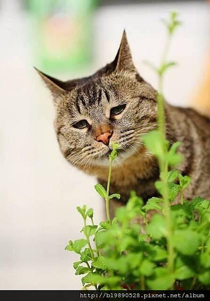 cat03.jpeg