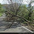 蘇迪勒颱風災情.中正山產道.20150811-2.JPG