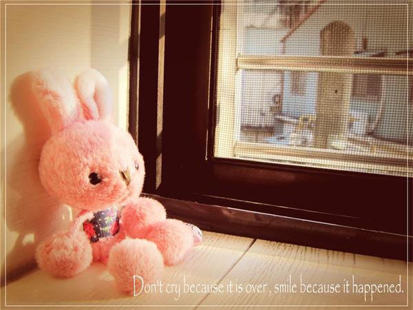 拍拍婕妤送我的兔兔