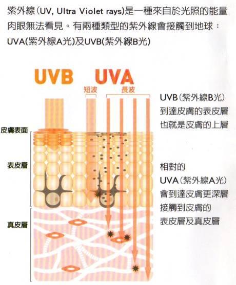 UVA的圖爾1