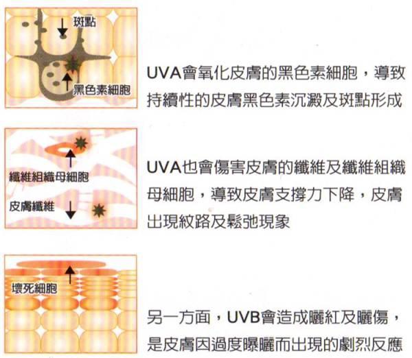UVA的圖解2