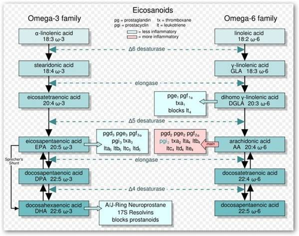 Omega3與Omega-6的關系