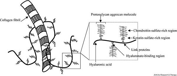 Hyaluronic acid and collagne detailed