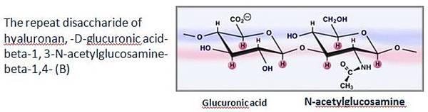 玻尿酸的結構2