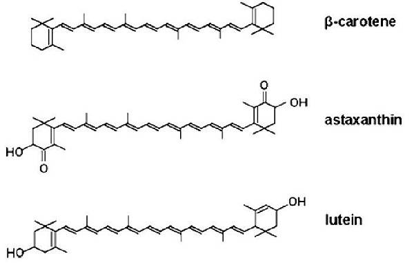 astaxanthin的結構