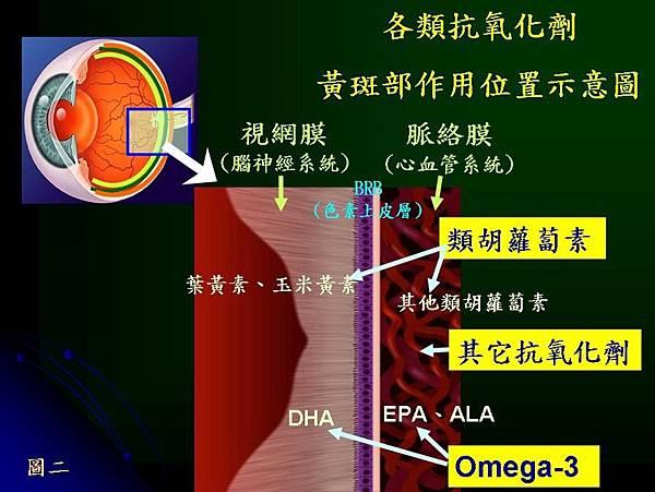各類抗氧化劑黃斑部作用位置示意圖