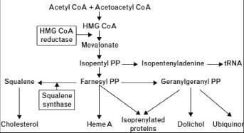 Squalene合成膽固醇的機轉