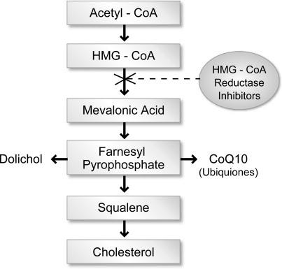 Statin減少Co Q10的生合成