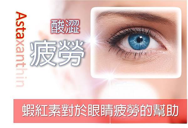 蝦紅素對於眼睛疲勞的幫助