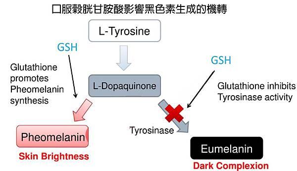 GSH的影響黑色素生成