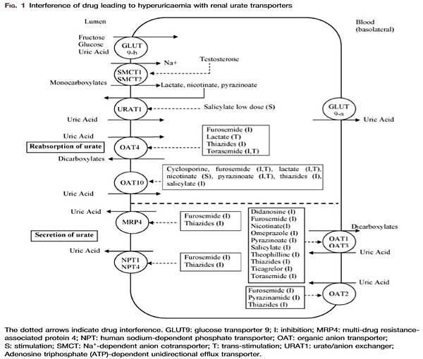 藥物引起尿酸偏高的機轉圖