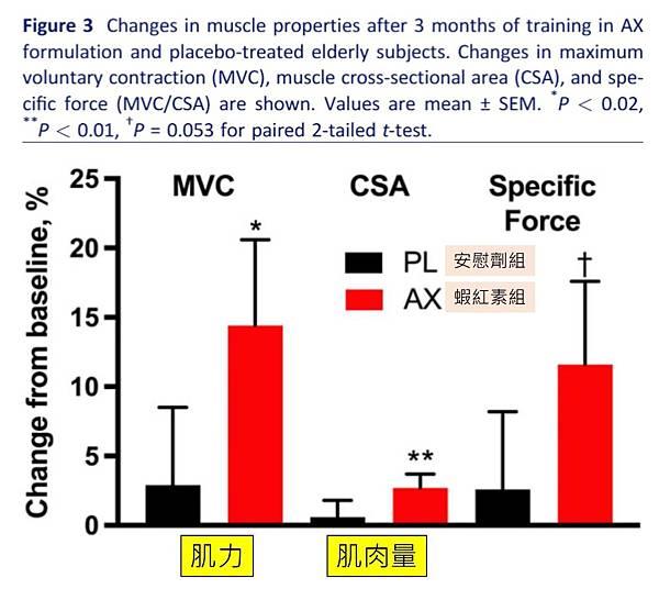 蝦紅素增加肌力及肌肉量