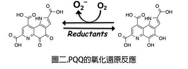 PQQ的氧化還原反應