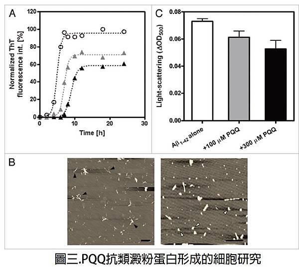 PQQ抗類澱粉蛋白形成的細胞研究
