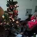 還有組聖誕樹