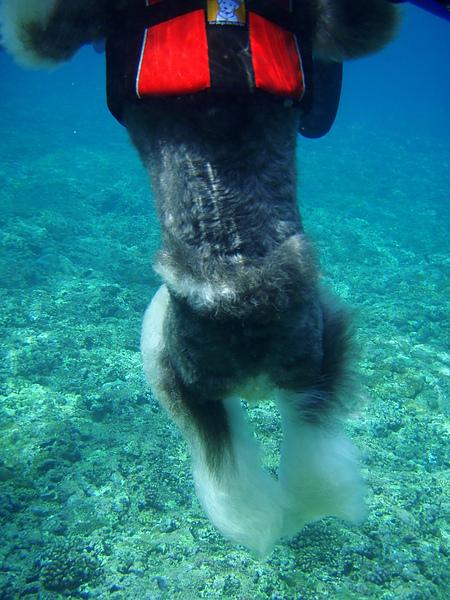 水中美腿.JPG