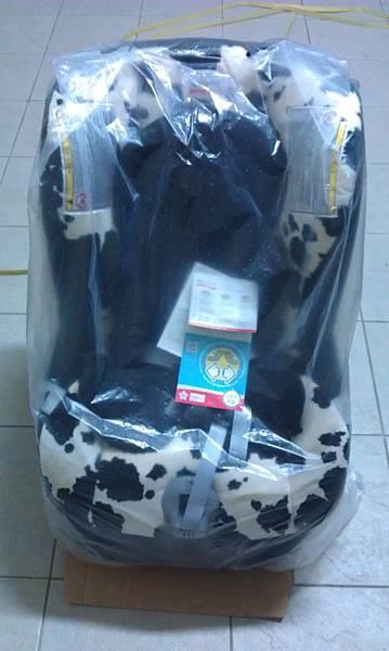 穿著防塵袋的乳牛安全汽座