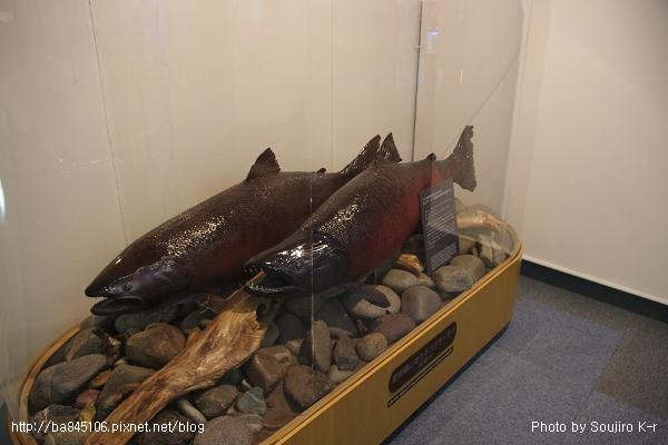 D1-03.千歲.鮭魚的故鄉 (18).jpg