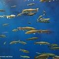 D1-03.千歲.鮭魚的故鄉 (21).jpg