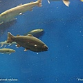 D1-03.千歲.鮭魚的故鄉 (23).jpg