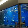 D1-03.千歲.鮭魚的故鄉 (24).jpg