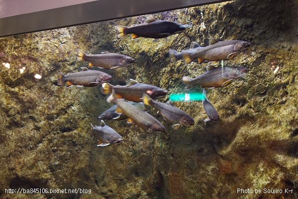 D1-03.千歲.鮭魚的故鄉 (26).jpg