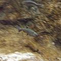 D1-03.千歲.鮭魚的故鄉 (27).jpg