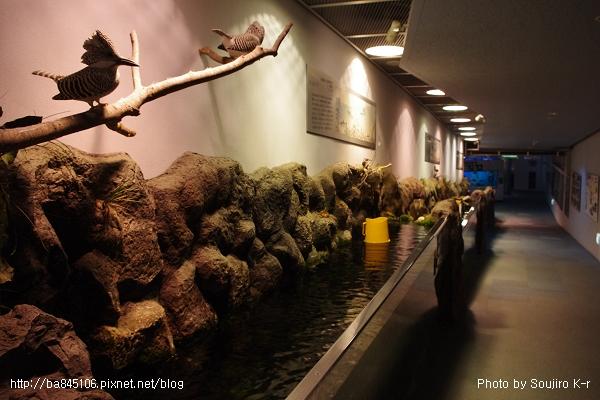D1-03.千歲.鮭魚的故鄉 (32).jpg