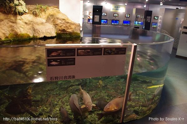 D1-03.千歲.鮭魚的故鄉 (39).jpg