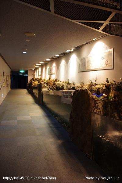 D1-03.千歲.鮭魚的故鄉 (40).jpg
