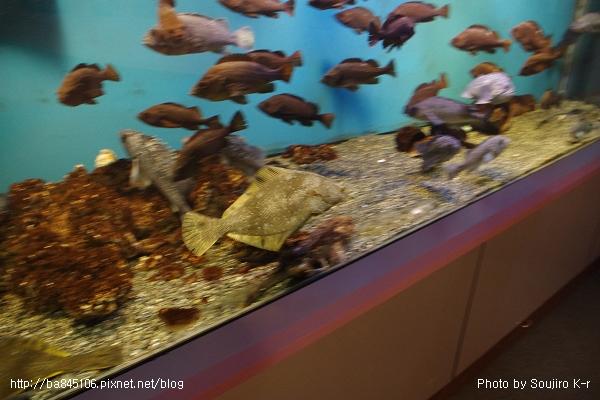 D1-03.千歲.鮭魚的故鄉 (41).jpg