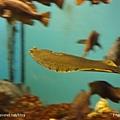 D1-03.千歲.鮭魚的故鄉 (42).jpg