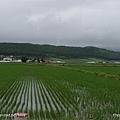 D3-03.前往富田農場 (15).jpg